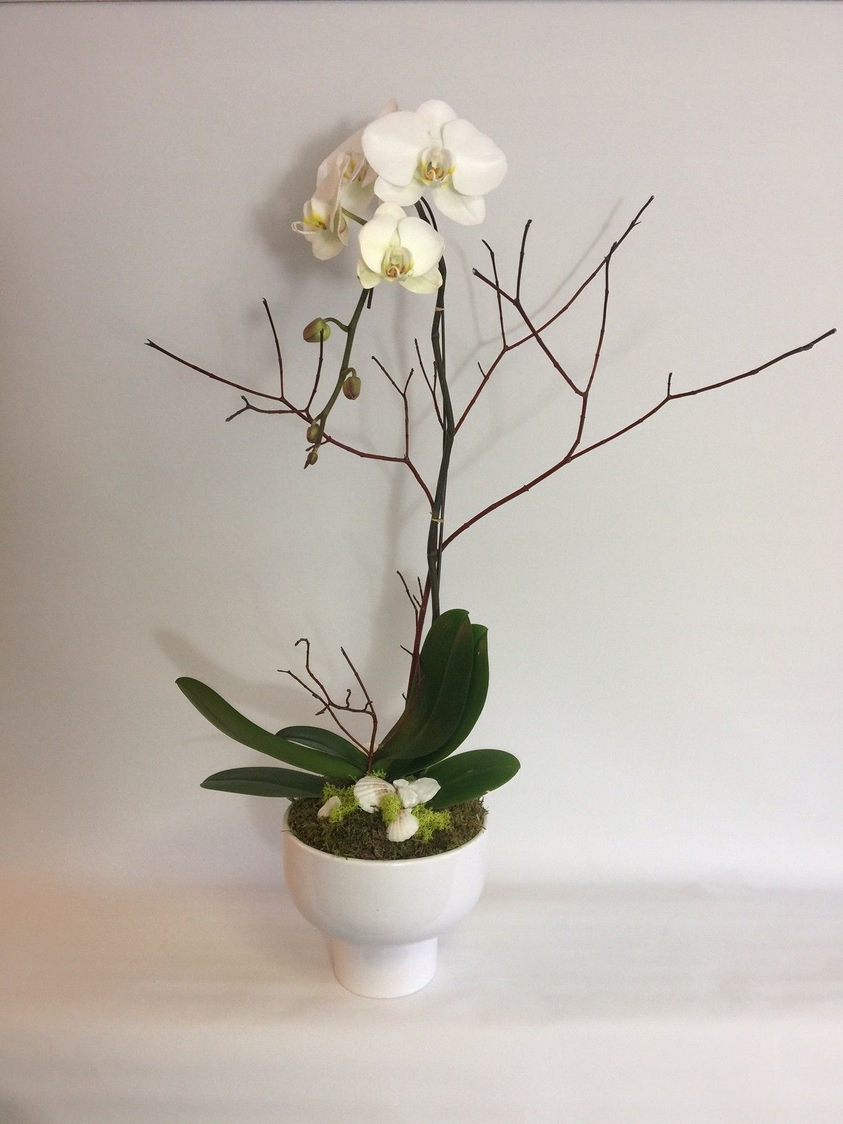 Fiori Floral Design | Flower delivery, Orchid plants ...