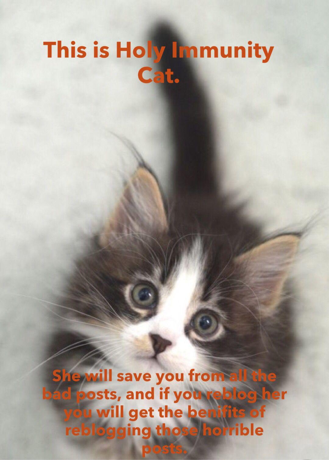 Holy Immunity Kitty Immunity Cat Kitty Cats