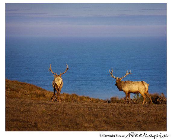 Bull Elk Ocean View Wildlife Photographic Print Wall by Neekapix, $15.00