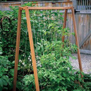 Building A Frames Tomato trellis Martha stewart and Gardens