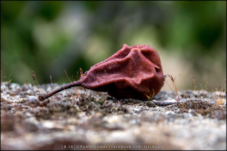 Quintela de Lampaças [2014 - Macedo de Cavaleiros - Portugal] #natureza #naturaleza #nature #fotografia #photography #foto #photo #europa #europe #pera #pear