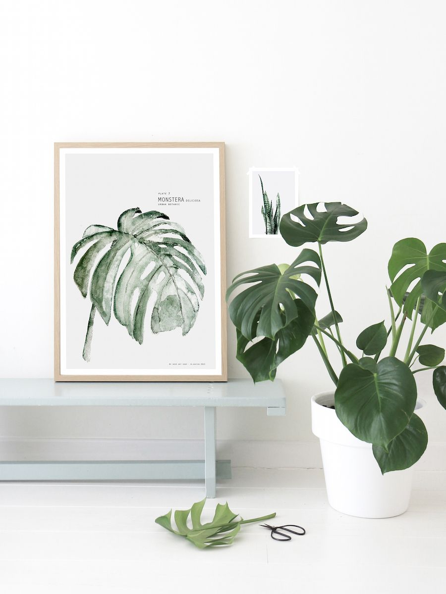 Plante D'intérieur Botanic Monstera Print From Urban Botanic Collection By My Deer Art Shop