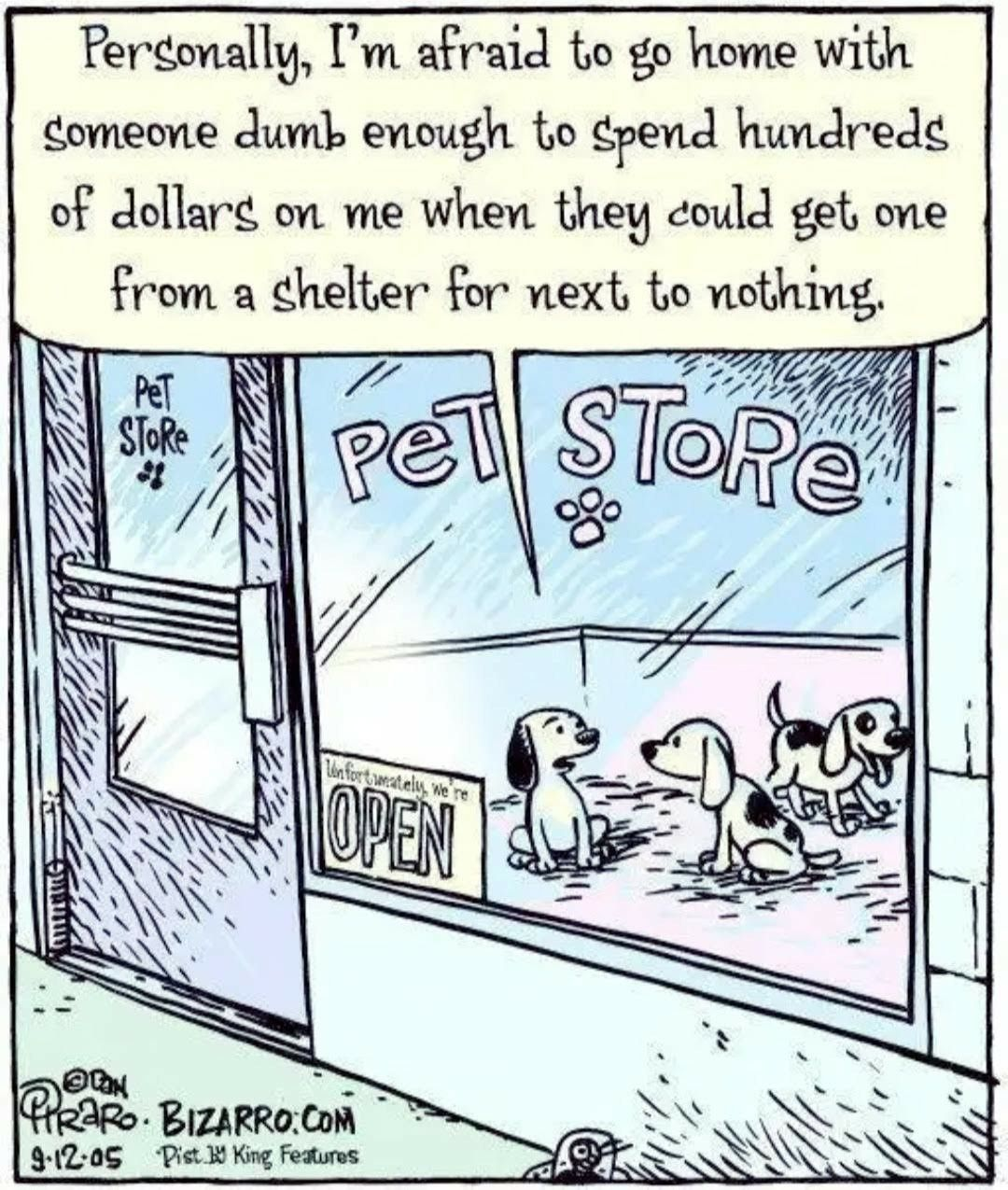 Pin By Carol On Worth A Thousand Words Pet Store Pets Buy Puppies