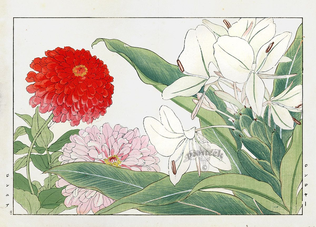 Ginger Zinnia Tanigami Konan Western Flower Woodblock Prints 1917 Botanical Prints Japanese Woodblock Printing Flower Prints