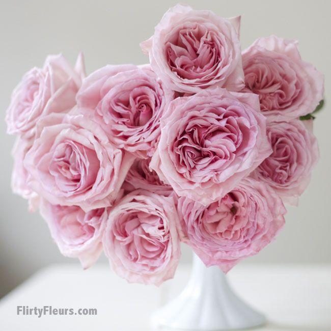 Flirty Fleurs Pink Garden Roses Study With Alexandra Farms Pink
