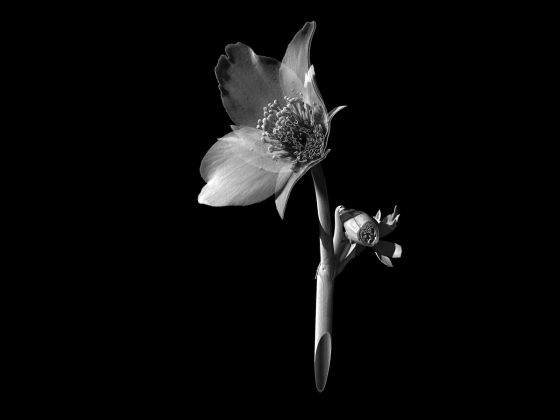 flower-giles-revell-01
