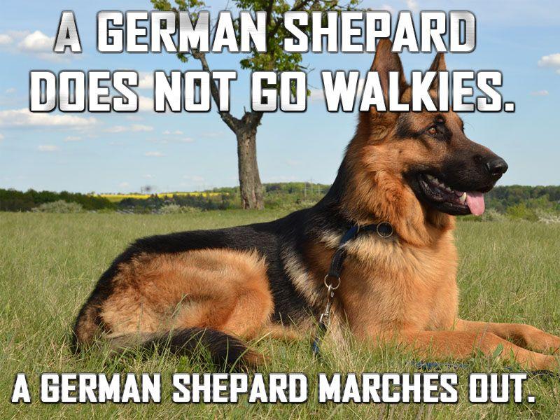 Evil Jokes From A German Funny Post German Shepherd Funny German Shepherd Dogs German Shepherd Quotes