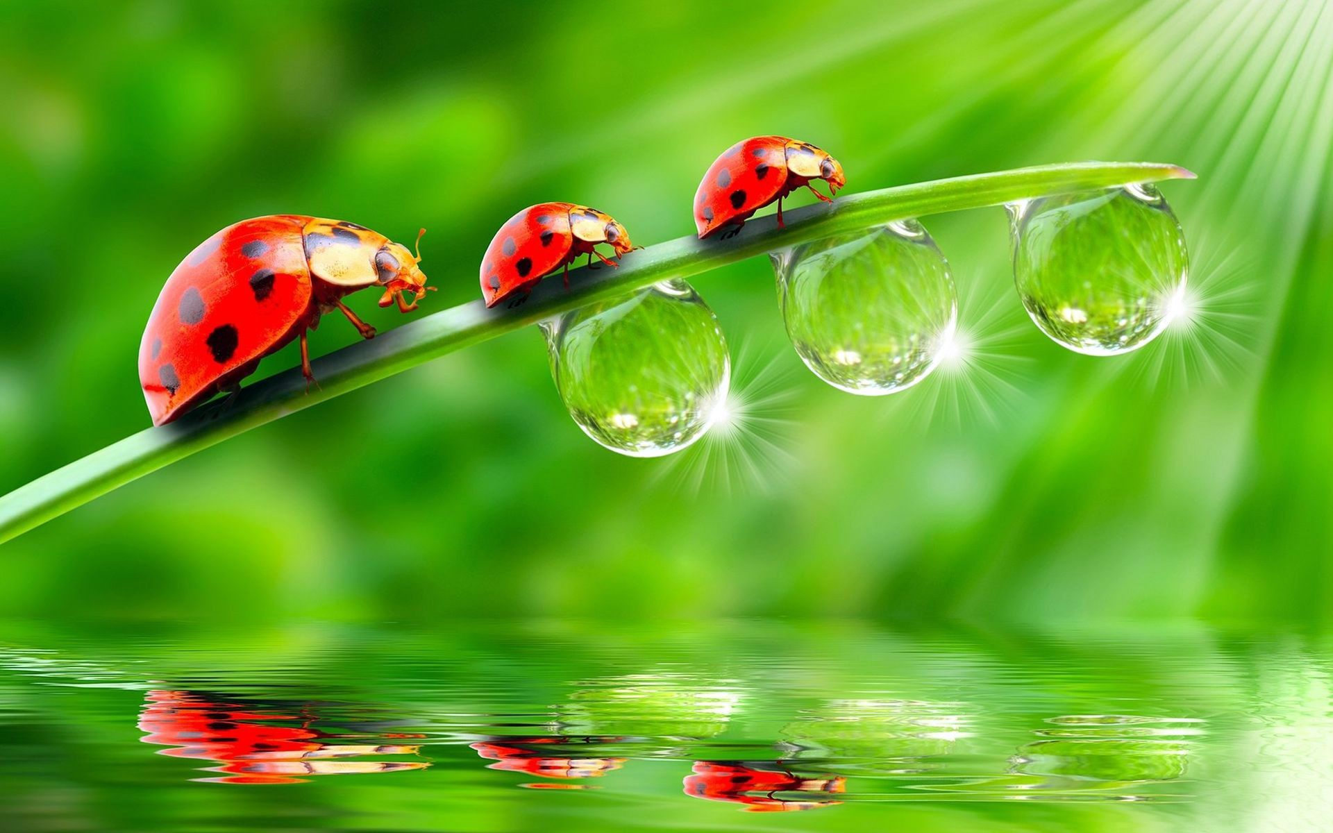 Ladybugs wallpapers and images download wallpapers pictures photos smiles pinterest - Ladybug watering can ...