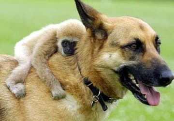 25 Monkeys That Are Obsessed With Dogs Unlikely Animal Friends