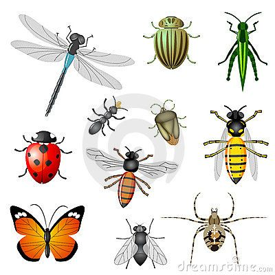 Insectes et anomalies