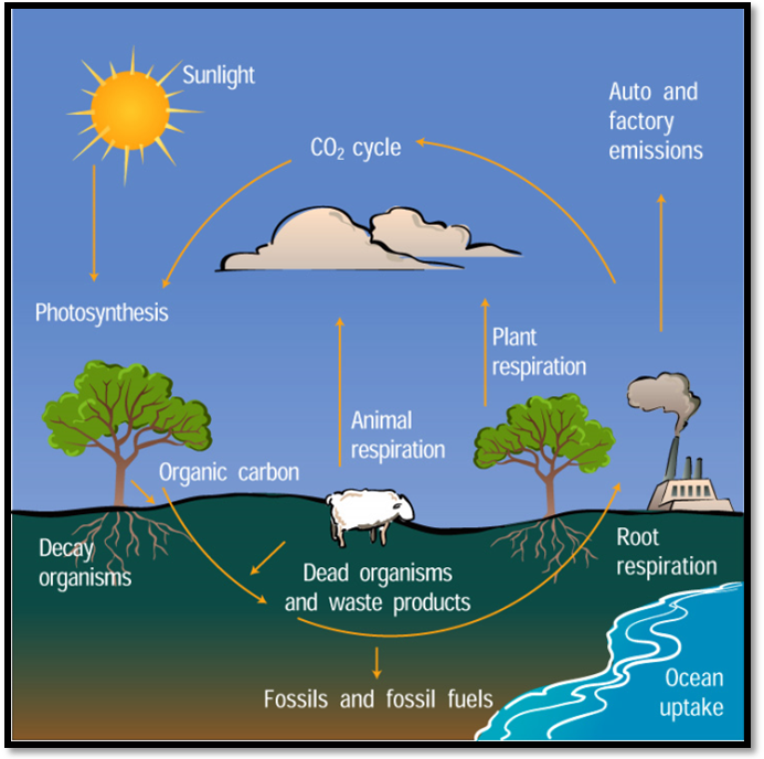 Printables Carbon Cycle Worksheet pictures the carbon cycle worksheet kaessey collection of diagram bloggakuten