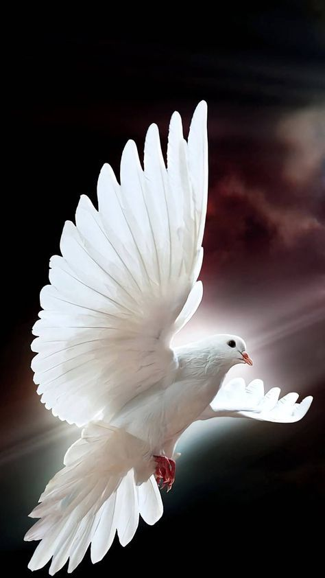 Download Easter Wallpaper By 2114opal 5b Free On Zedge Now Browse Millions Of Popular Dove Wallpapers And Rin Dove Pictures Easter Wallpaper Dove Images White pigeon hd wallpaper download
