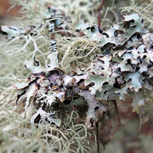 Epingle Sur Fleurs Du Bush Australien