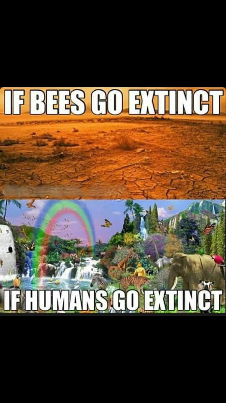 If Humans Go Extinct Vegan Memes Vegan Humor Why Vegan