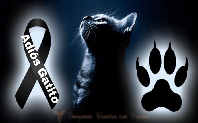 Imágenes De Luto Para Gatos Mascotas Gatos Y Perros En El