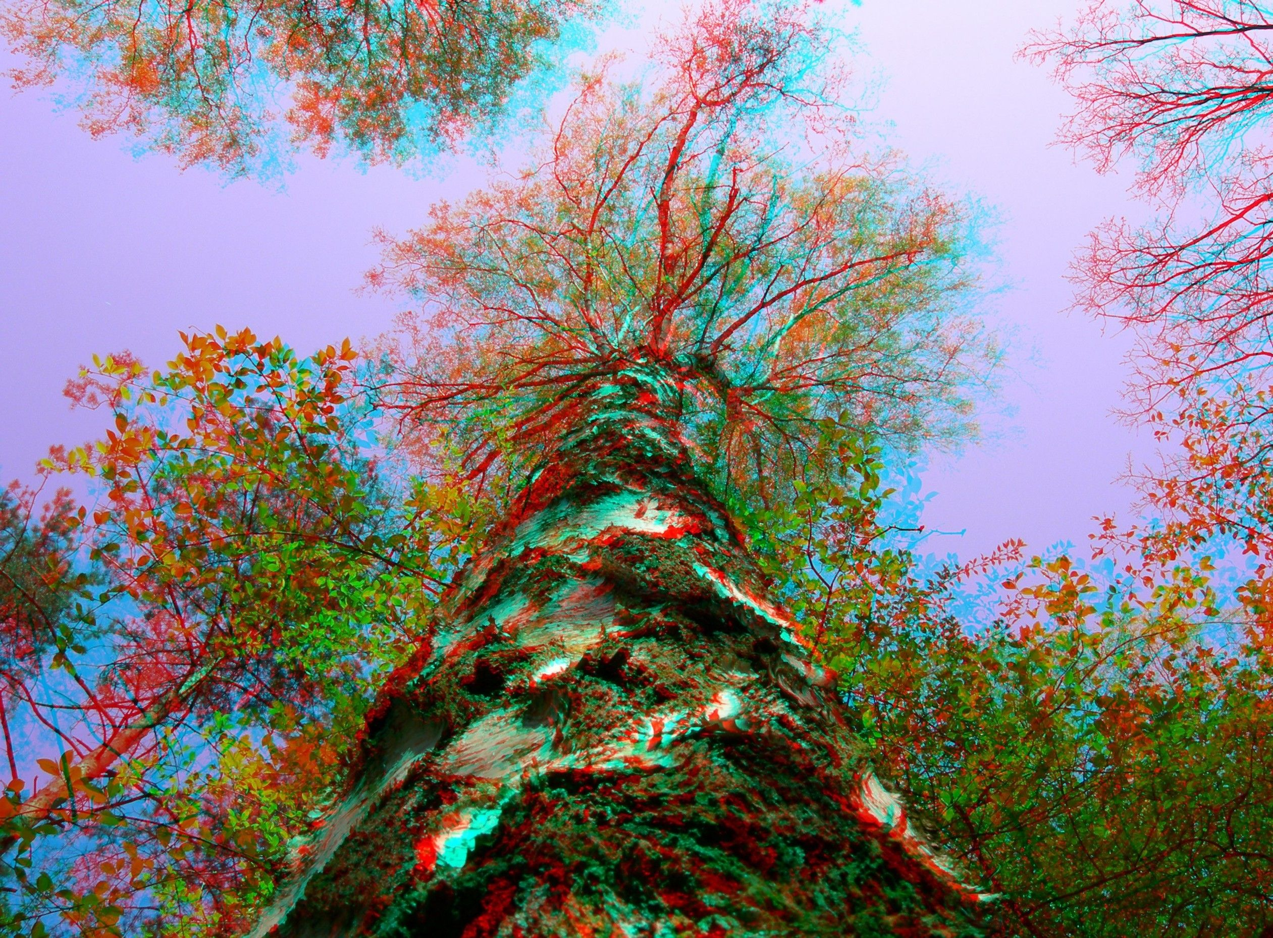 3d 3d Picture Trees Sky Wallpaper Background Images Desktop Background Images 3d Pictures