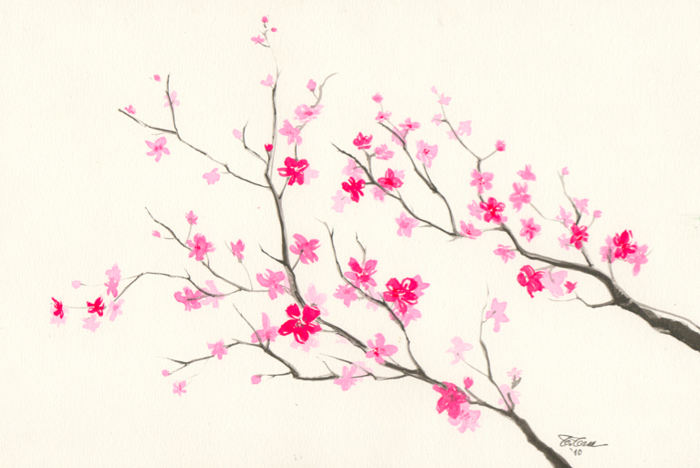 Pencilhead Cherry Blossom Painting Cherry Blossom Drawing Flower Drawing