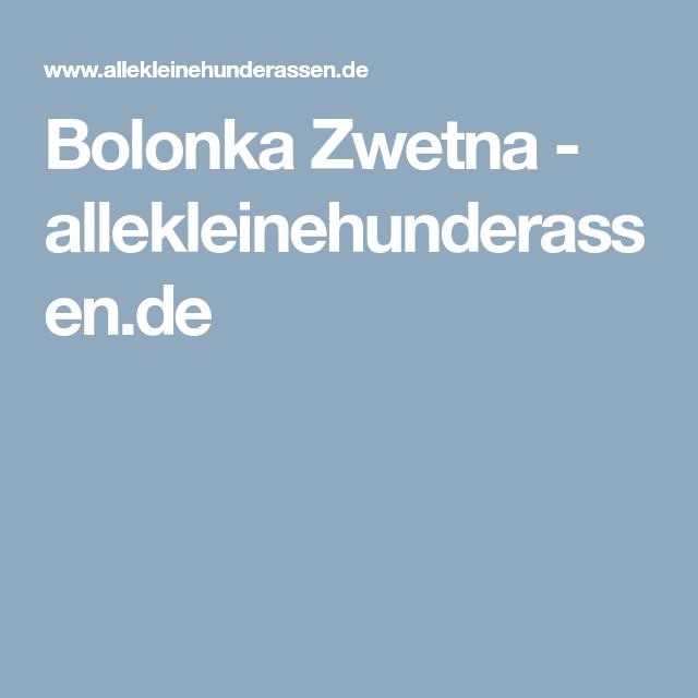 Bolonka Zwetna allekleinehunderassen.de Bolonka zwetna