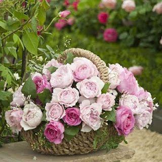 pingl par brigitte leroy sur fleurs que j 39 aime. Black Bedroom Furniture Sets. Home Design Ideas