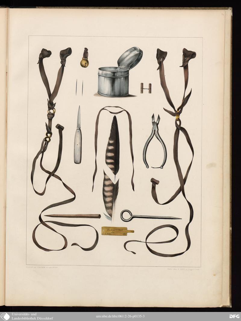 """Illustration Dessiné par Portm"" from ""Traité de Fauconnerie"" (1844-1853) by Hermann Schlegel and Abraham H Verster van Wulverhorst."