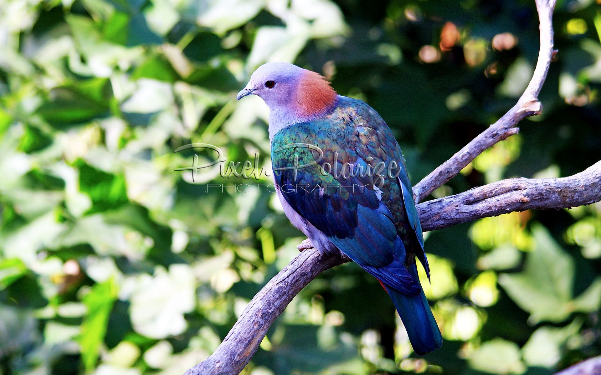 Arboreal Birds, Colorful birds, Birds butterflies