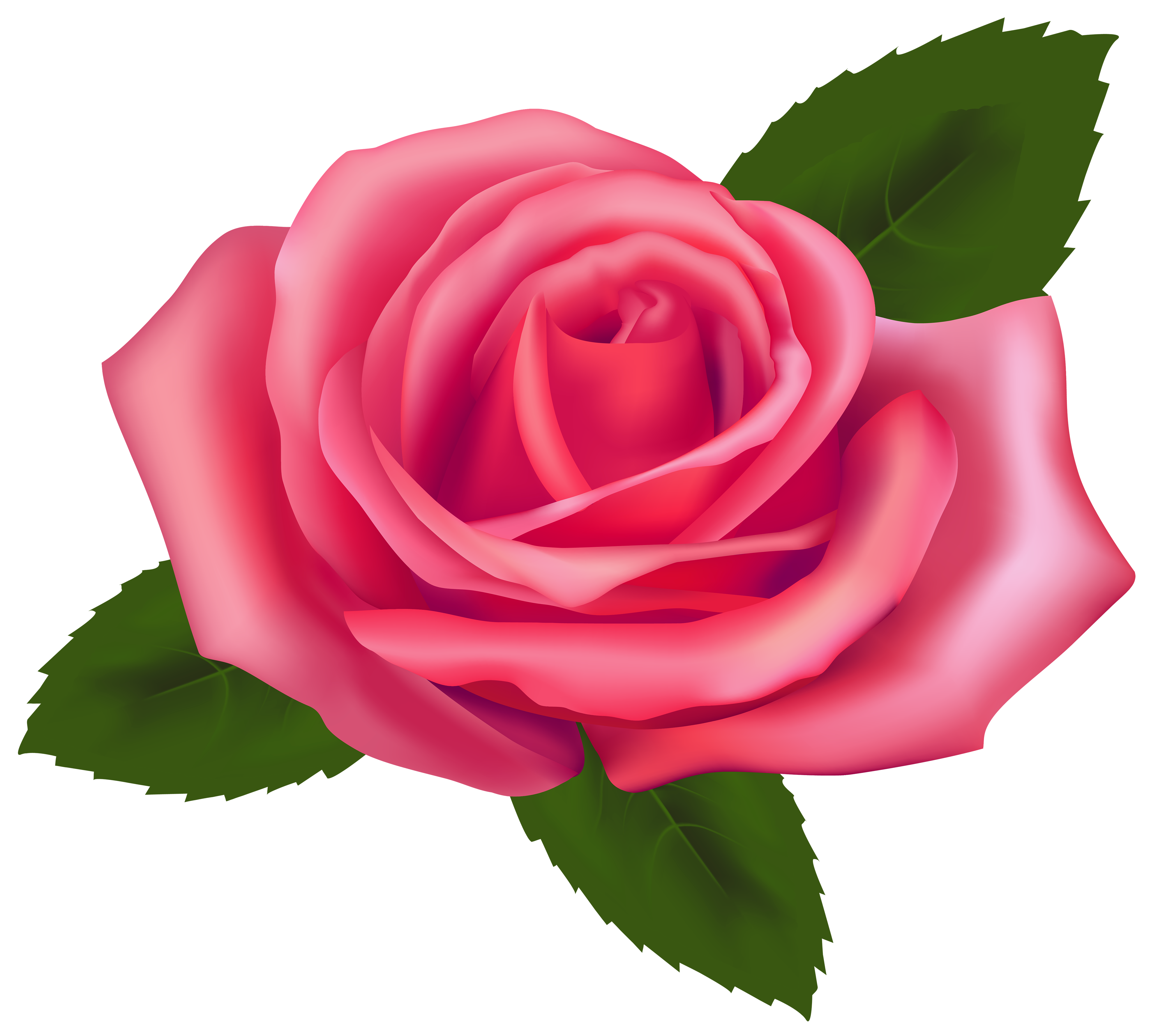 Beautiful Pink Rose PNG Clipart Natal