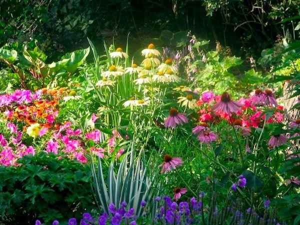Small mixed border gardening