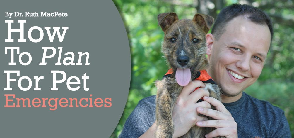 How To Plan For Emergencies Pet Insurance and Pet Savings