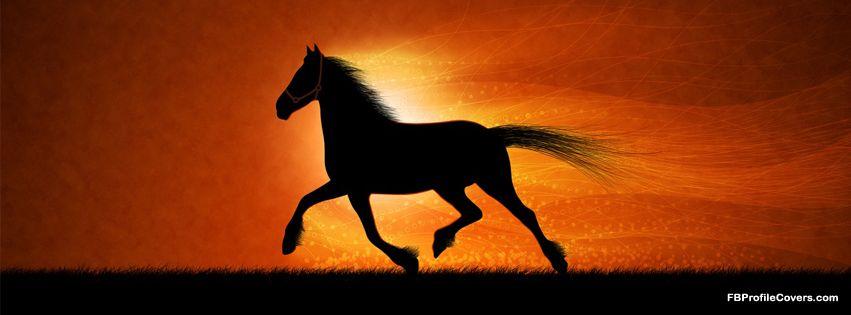 Black Horses Horse Wallpapers For Desktop Wallpaper Amazing Background Animal