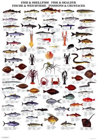 Fish Shellfish Poster Sea Fish Fish Chart Fish
