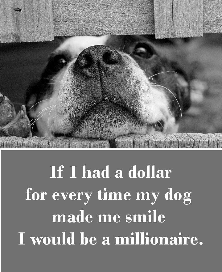 My Dog Loves Me Quotes: 42 Dog Sayings Which Will Touch Your Heart