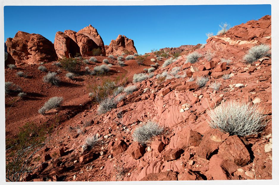 Creosote Bush litters the red rock of Valley of Fire State