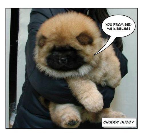Black Masked Cinnamon Baby Dogs
