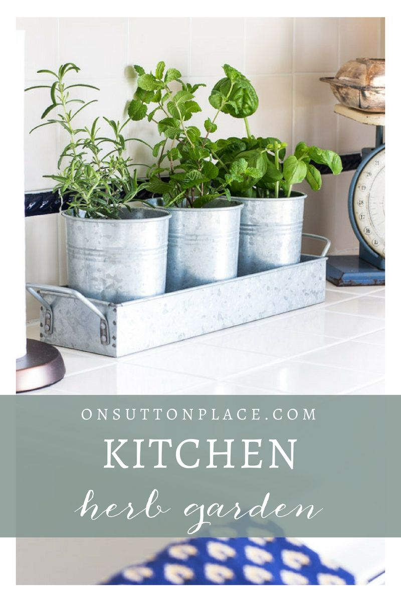 Kitchen Herb Garden | Herbs, DIY ideas and Herbs garden