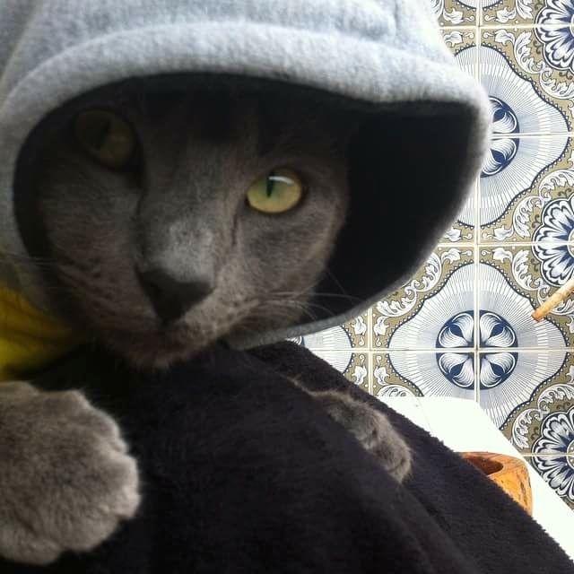 Baby must be kept warm!  http://ift.tt/2fU3aCB