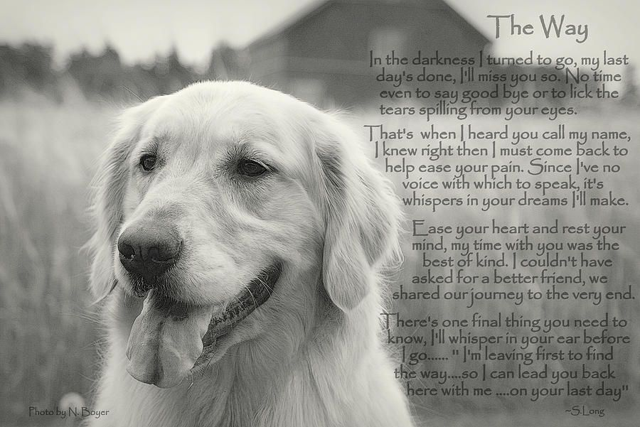 Golden Retriever The Way Golden Retriever Quotes Dog Cancer