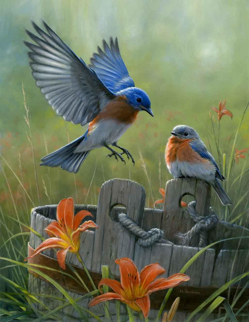 Eastern Bluebird, New York State Bird HiLook Online