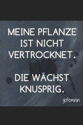 Spruch Des Tages Spruche Funny Quotes Humor Und Quotes