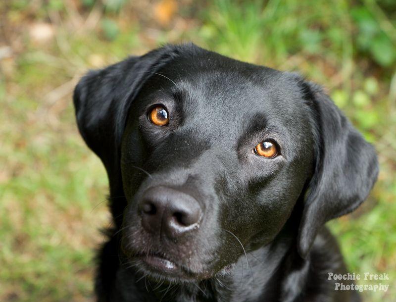 black dogs google search sina pinterest
