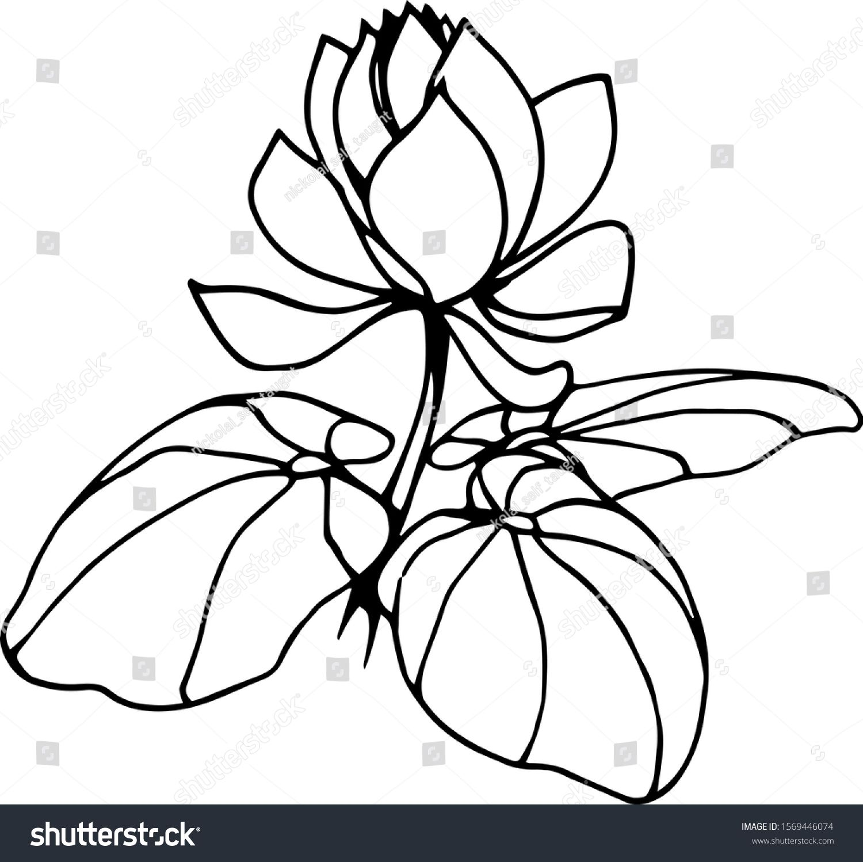 Plant Tropical Lotus Flower Leaves Vector Stock Vector