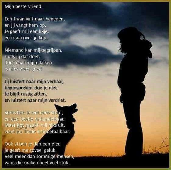 Citaten Over Honden : Mijn honden spreuken pinterest en