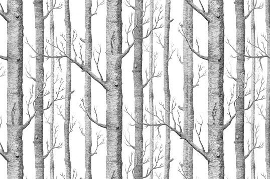 Murals Wallpaper Illustrated Birch Tree Forest Tree