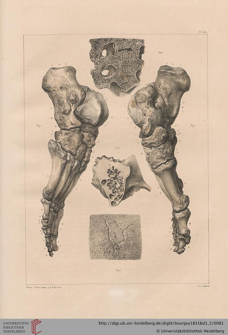 Tome 1. Pl. 40. Jean-Baptiste Marc Bourgery  (1797-1849 https://pinterest.com/pin/287386019948321810), Nicolas Henri Jacob. [Traité complet de l'anatomie de l'homme comprenant la médecine opératoire (1831-1854  https://pinterest.com/pin/287386019941966857/ )].