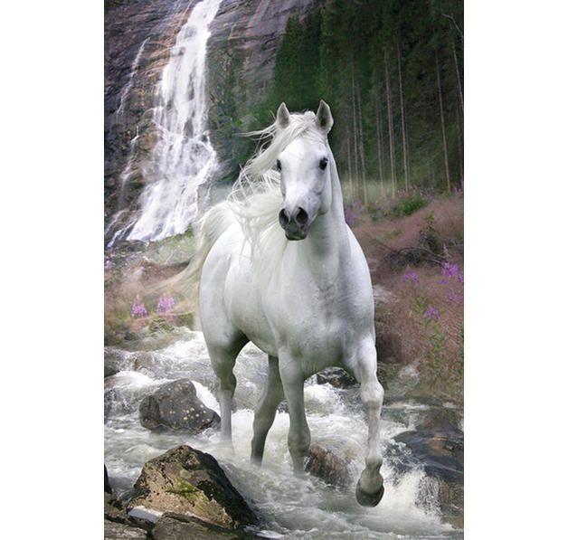 Pferde Poster Schimmel Pferde Tiere Pferdefotos