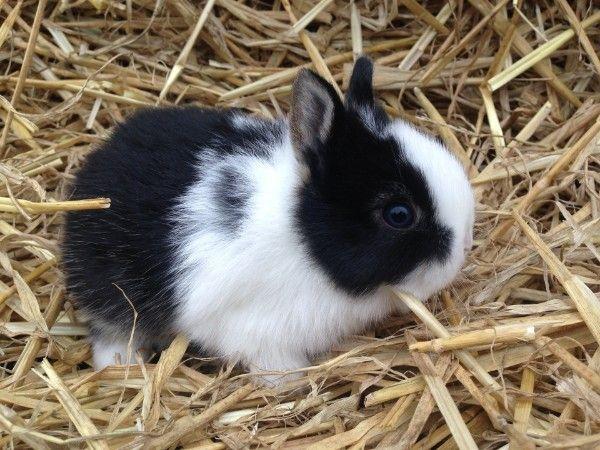 Kaninchen kaufen München, Zwergkaninchen kaufen München