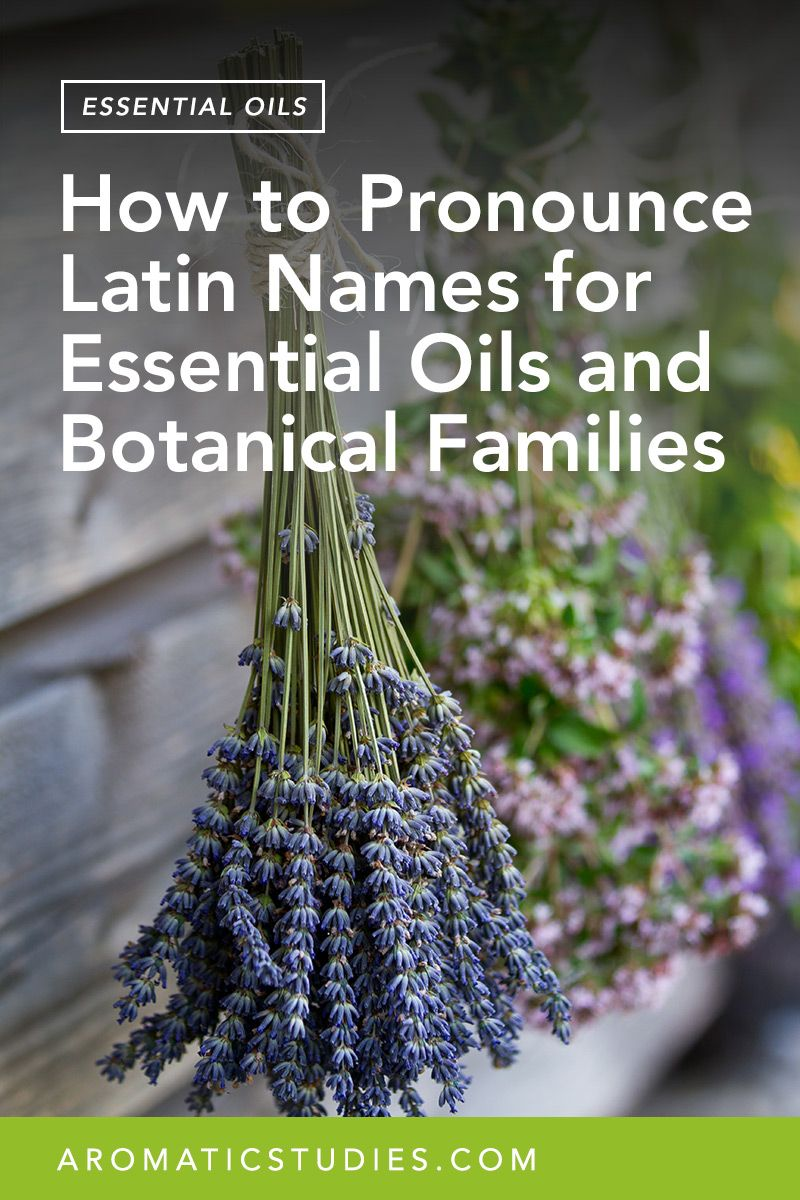 How to Pronounce Latin Names for Essential Oils and Botanical