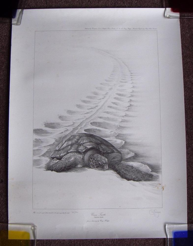 8c107bda Gary Hodges limited edition print Green Turtle signed Greenpeace Royle  print. Auction for 10 days with 99 pence start. Rare chance to buy.