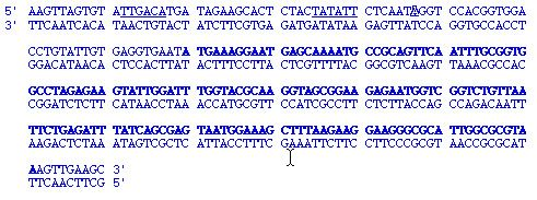 Difference Between Coding And Template Strand Genetics Genomics