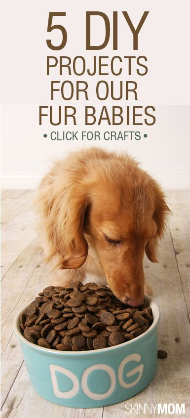 5 Diy Projects For Our Fur Babies Dog Food Recipes Hypoallergenic Dog Food Natural Pet Food