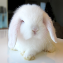 my bb bunny is a blog featuring the cutest and most adorable bunnies on the Internet, along with...